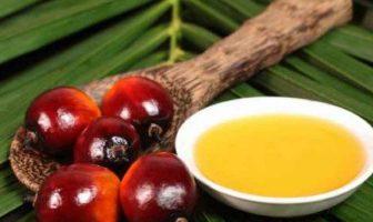 fa male l'olio di palma